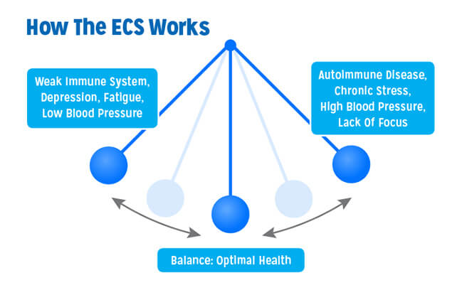 The Endocannabinoid System Balances the Body